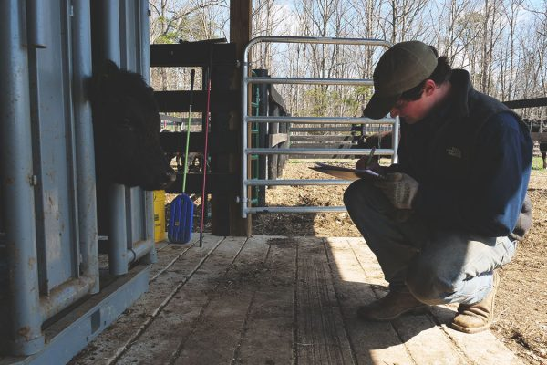 thistle-farms-cows (10)